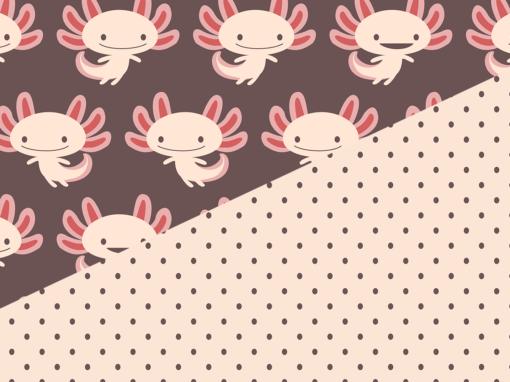 Petits axolotls